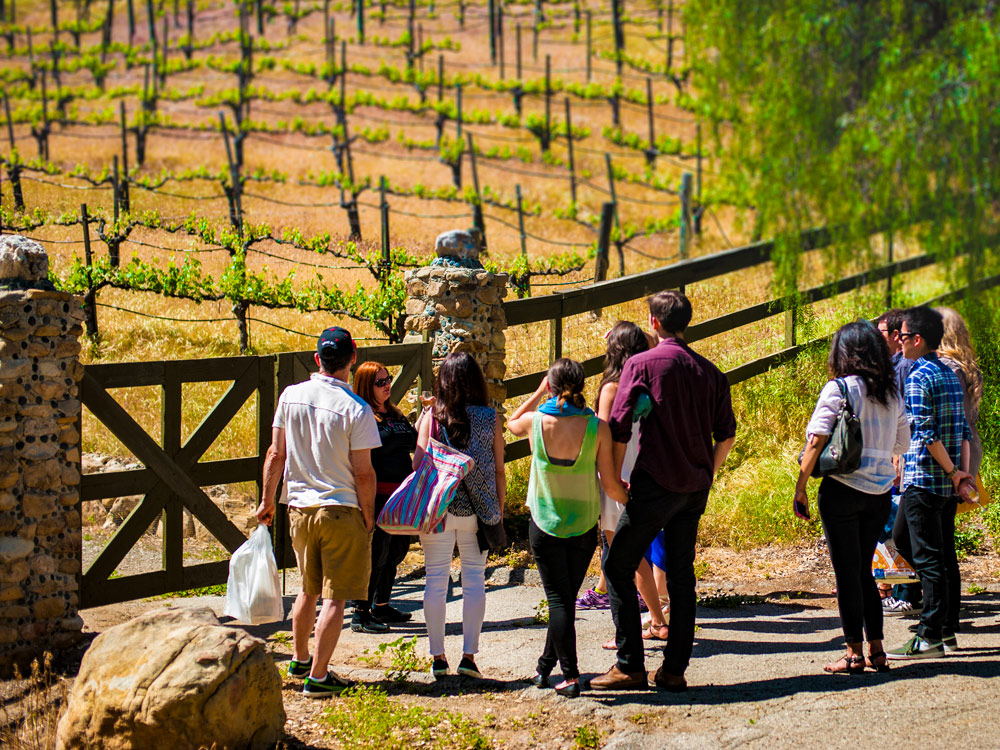 Guest enjoy a tour of the vineyard